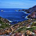 Baja Coast by Hugh Smith