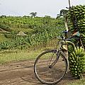 Banana Bike by Brian Kamprath