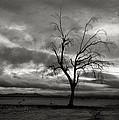 Bare Tree by John Nelson