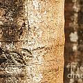 Bark Of A Tree by Rudra Narayan  Mitra