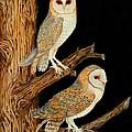 Barn Owl Duo by Doreen  Stopczynski