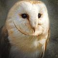 Barn Owl by Ian Merton