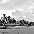 Beach Of The Iguana Bw by Norman Johnson