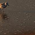 Beach Wildlife by David Dufresne