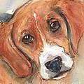 Beagle Dog  by Maria Reichert