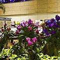 Beautiful Flowers Inside The Changi Airport In Singapore by Ashish Agarwal
