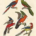 Beautiful Parrots by Splendid Art Prints