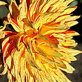 Beauty In The Sun by Christiane Schulze Art And Photography