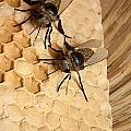 Bee Hive by Alex Grichenko