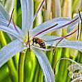 Bee by Baywest Imaging
