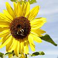 Bee On Flower by Les Cunliffe