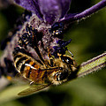BEE by Terence Kneale