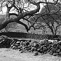 Bent Tree by Tod Ramey