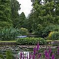 Beth Chatto Gardens by Sean Foreman