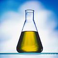 Biodiesel In Erlenmeyer Flask  by Juergen Ritterbach