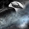 Bird by Christine Sponchia