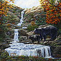 Black Bear Falls by Crista Forest
