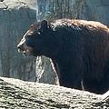 Black Bear by Janice Spivey
