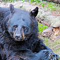 Black Bear by Paul Fell