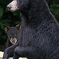 Black Bear With Cub by Sharon Fiedler