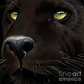 Black Leopard by Jurek Zamoyski