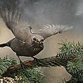 Blackbird by Heike Hultsch
