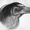 Blackburn Birds, 1895 by Granger