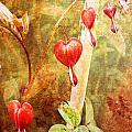 Bleeding Heart by Helene U Taylor