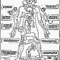 Bloodletting Chart, 1493 by Granger