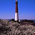 Blooming Barnegat by Skip Willits