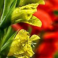 Blossom With Raindrops by Thomas R Fletcher