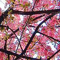 Blossoms And Bark by Barbara Hammond