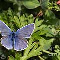 Blue Beauty by Jivko Nakev