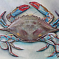 Blue Crab by Kristine Kainer