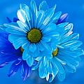 Blue Daisies In Vase Outdoors by Jim Corwin