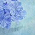 Blue Fantasy by Kim Hojnacki