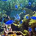 Blue Fish by Seven Seas