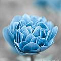 Blue Flower by Frank Tschakert