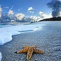 Blue Foam Starfish by Sean Davey