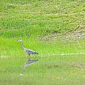 Blue Heron by Nick Kirby