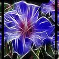 Blue Hibiscus Fractal by Peter Piatt