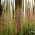 Blurred Trees by Matt Malloy