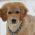 Bongo In The Snow by Frankie Picasso