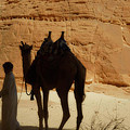 Bou Bou Camel With Beduin Owner  by Colette V Hera  Guggenheim