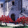 Bougainvillea And Stone Wall by Bernard  Barcos