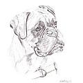Boxer - Clue by Steve Hamlin