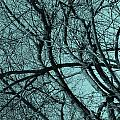 Branches by Bliss Of Art