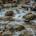 Bridalveil Creek Yosemite by Terry Garvin