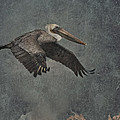Brown Pelican 2 by Ernie Echols