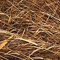 Brown Reeds by Tim Hester
